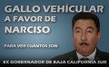 Narciso-Agundez-gallo-vehicular