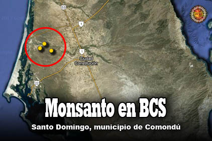 Monsanto en Santo Domingo de Comondú