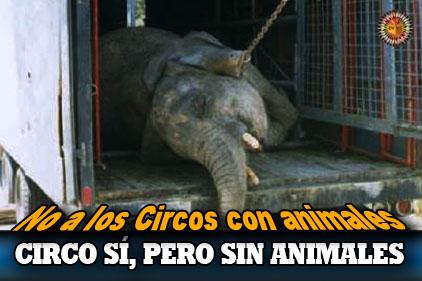 Image result for no circos