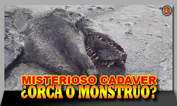 Misterioso hallazgo en una playa: ¿orca o monstruo marino?
