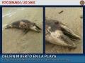Foto denuncia: delfin muerto en Los Cabos
