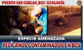 Pelícanos contaminados en fábricas de harina de pescados