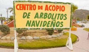 Centros de Acopio de Arbolitos de Navidad Cabo San Lucas