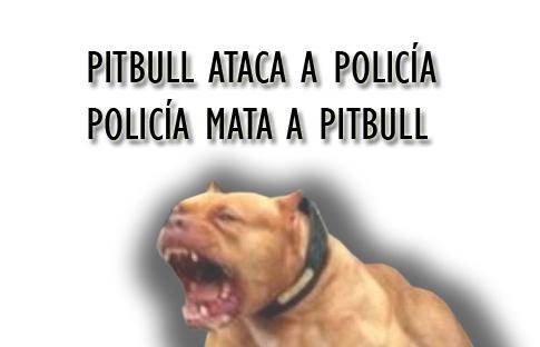 pitbull-policia
